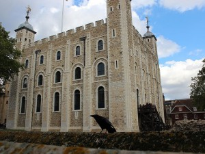 Tower of London and raven