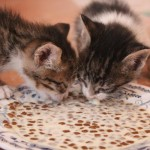 Name the Kittens Competition Results